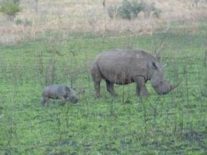 rhinoandbaby